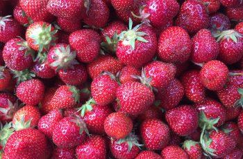 Sea of Strawberries